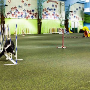 rolled-rubber-canine-pet-flooring